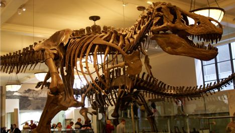 Museums axe 53 jobs as spending cuts bite