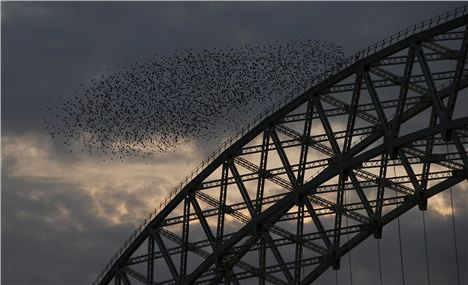 Starlings Over The Runcorn Brodge