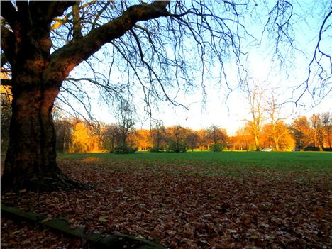 Sefton Park Meadows %282%29