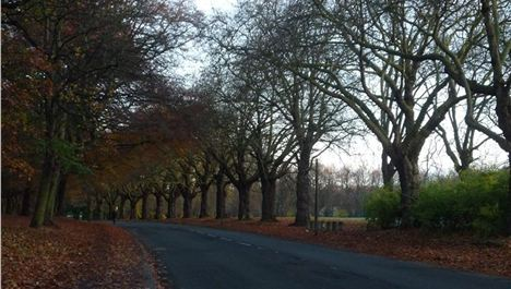 'NO moratorium on Sefton Park Meadows houses'